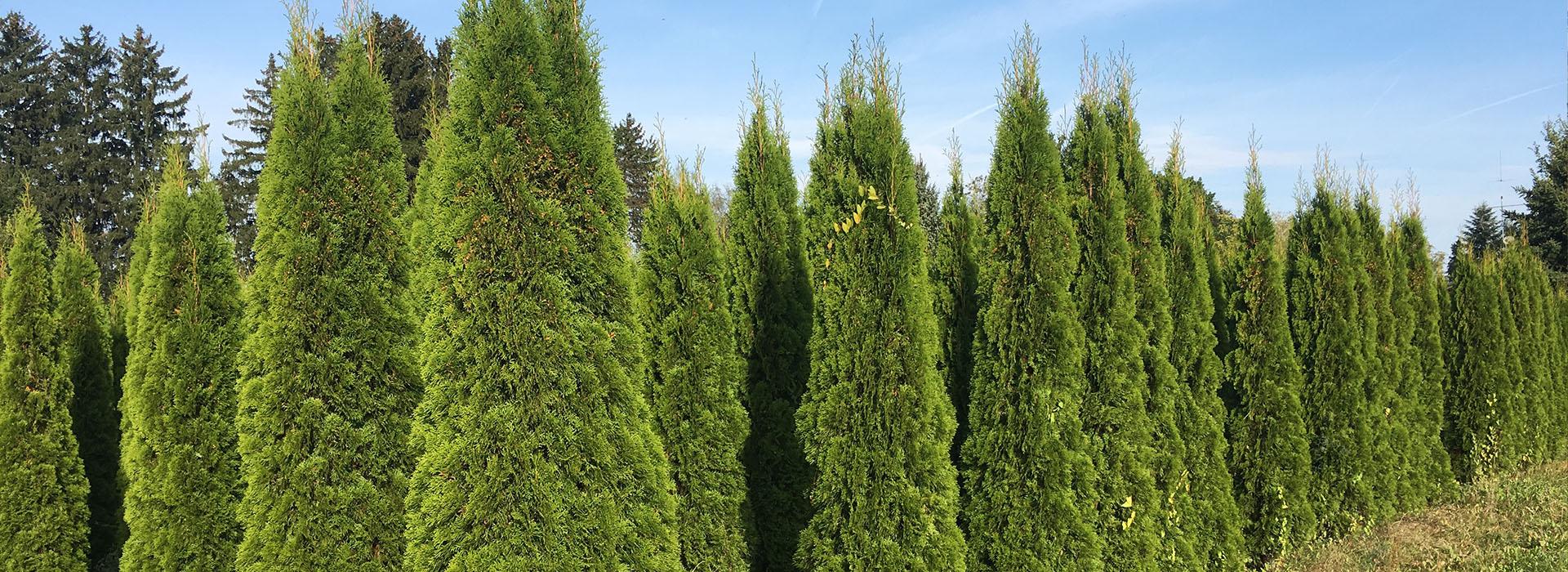 Olschewsky Baumschulenolschewsky Garten Und Landschaftsbau